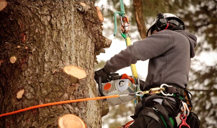 Cutting Tree Branches: 10 Best Tips for Removing Tree Limbs