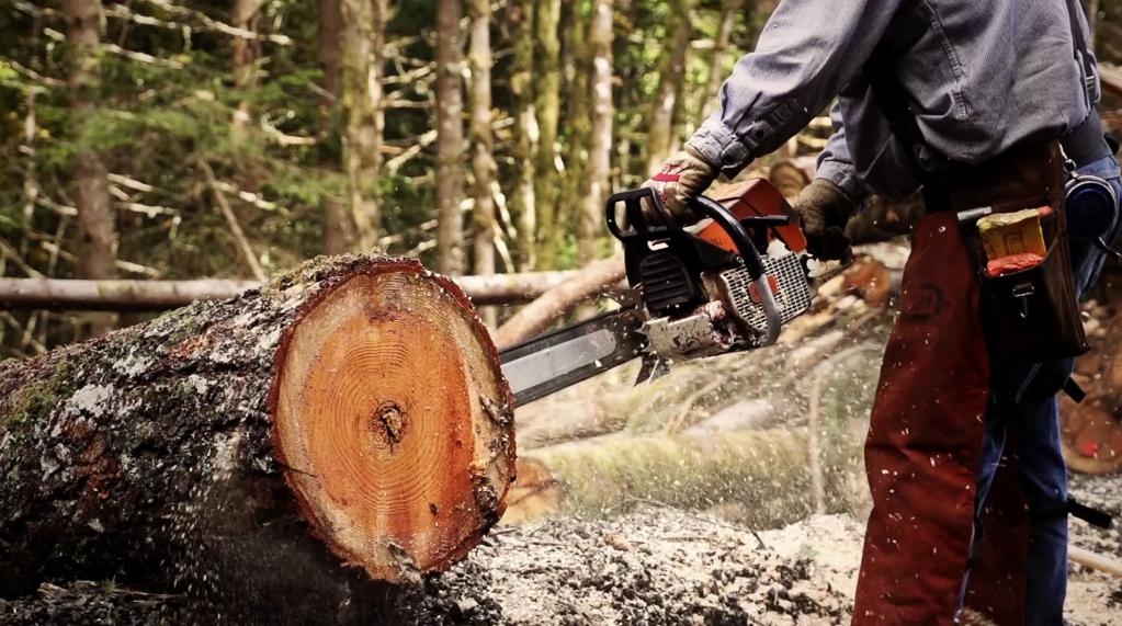 Free Tree Removal: 5+ Helpful Tips