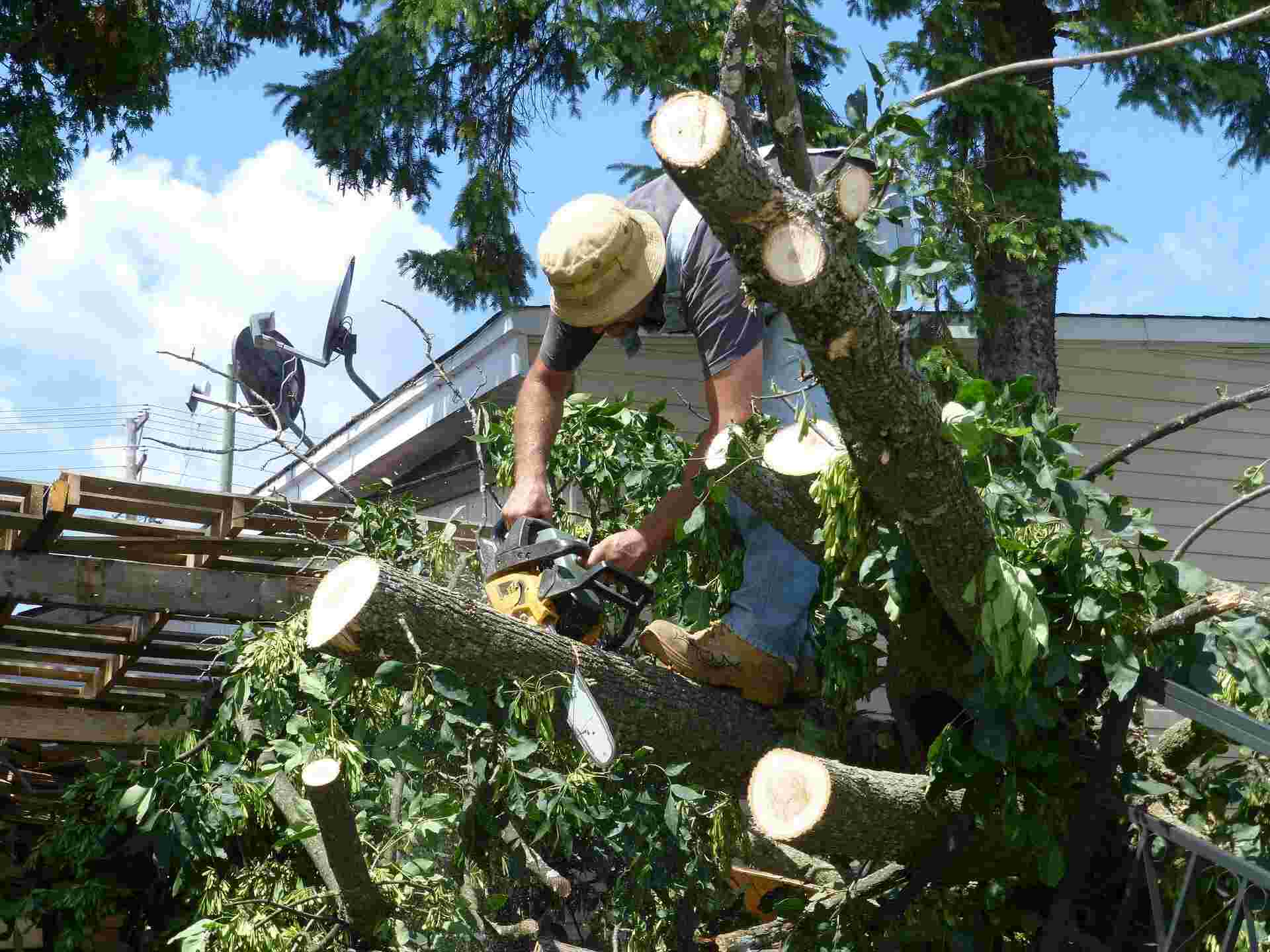 Emergency Tree Removal Near Me: Professional Services (2021)