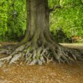 2+Top Ways How To Deal With Exposed Tree Roots - Best Tips