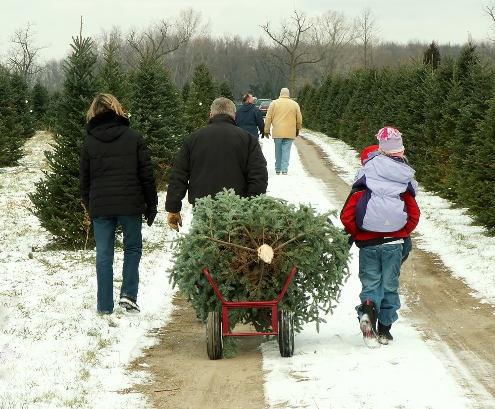 Where To Cut Your Own Christmas Tree - 8 Basic Places