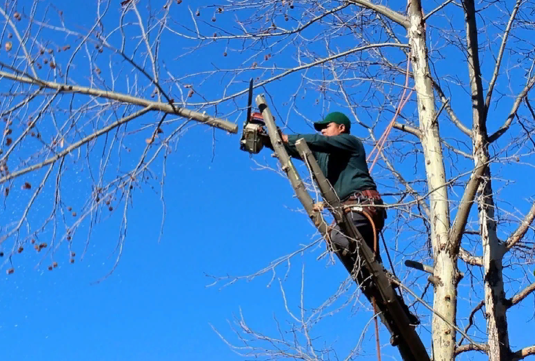 How To Find Tree Cutting Service Near Me: Best 2 Services