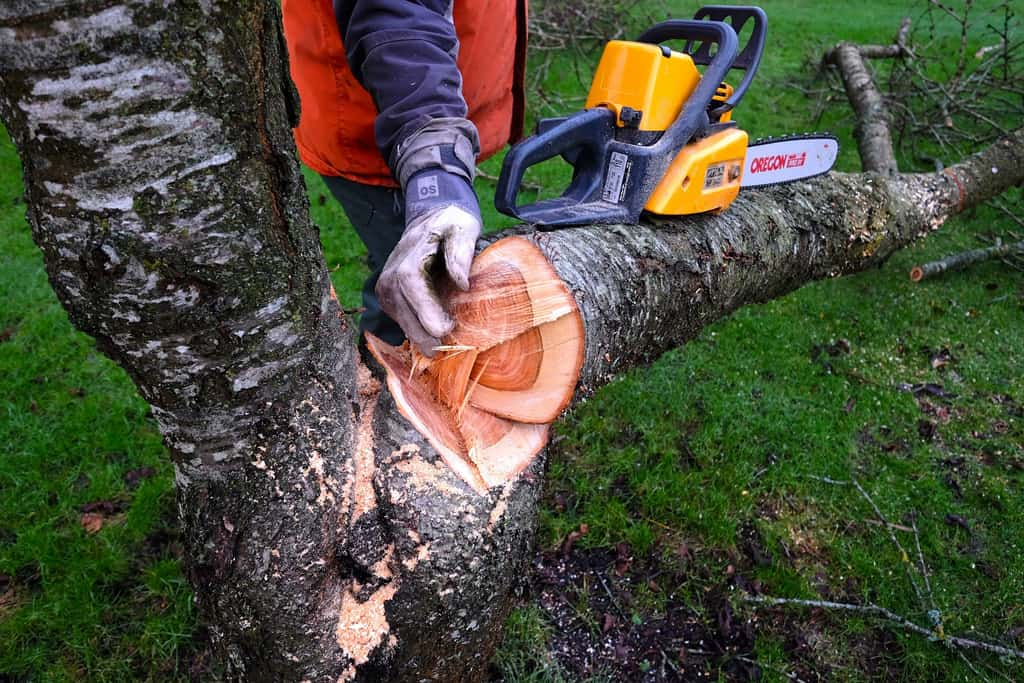 How to cut down a small tree