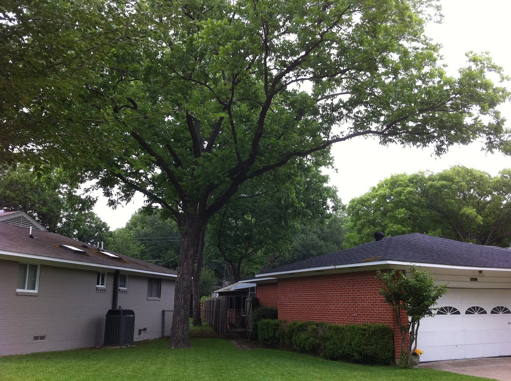 6+Who is Responsible For Cutting Overhanging Tree Branches?