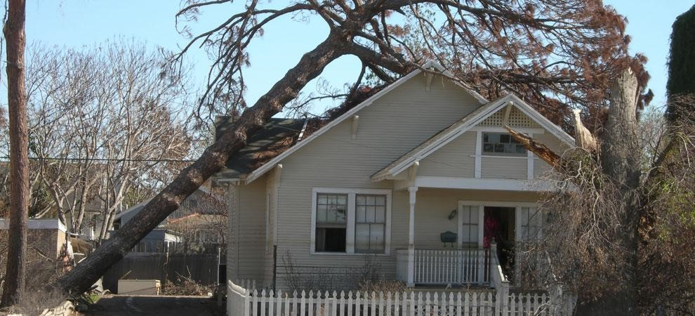 How to Cut a Tree Down Close to a House - 5 Important Tips