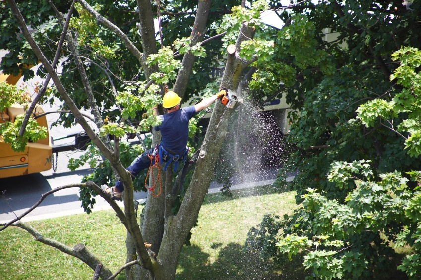 How Much Does Tree Trimming Cost - Best Cost Guide in 2021