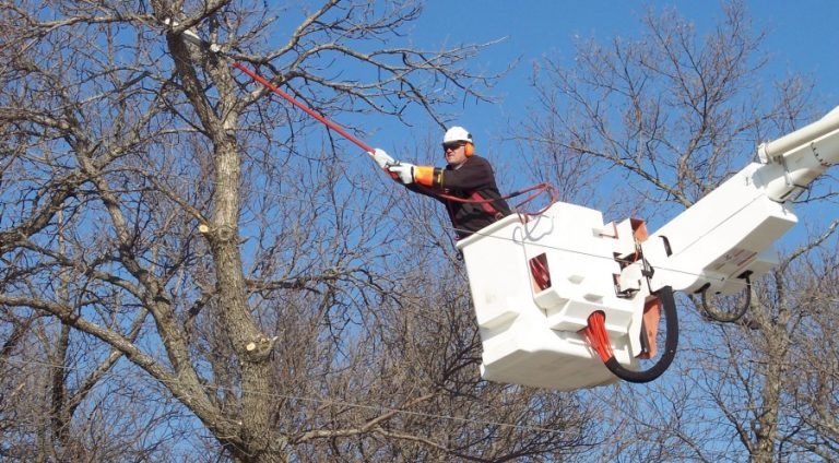 5+How Much Does Tree Trimming Cost - Complete Cost Guide