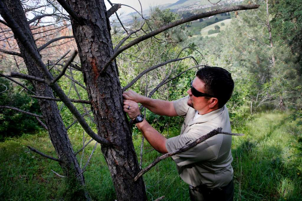 7 Secret Tricks How To Kill A Tree Without Cutting It Down