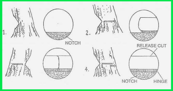Tree Cutting Techniques - 9+Best Detailed Manual [2021]
