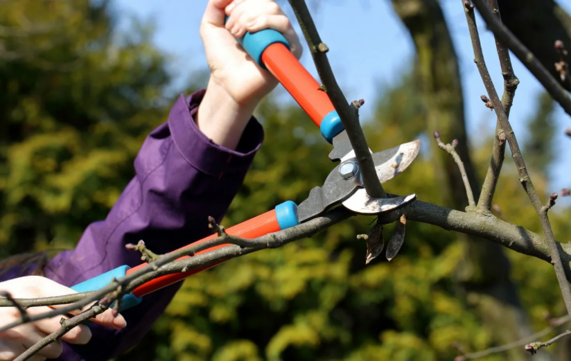 How to stop tree branches from growing back
