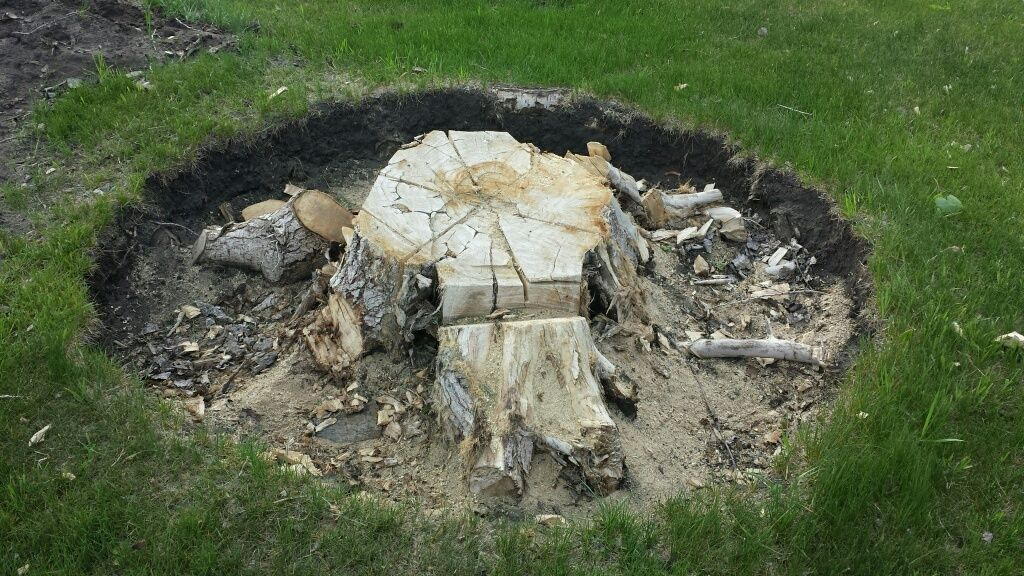 top of the stump