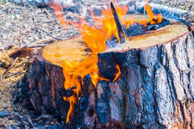 how to get rid of a tree stump with charcoal