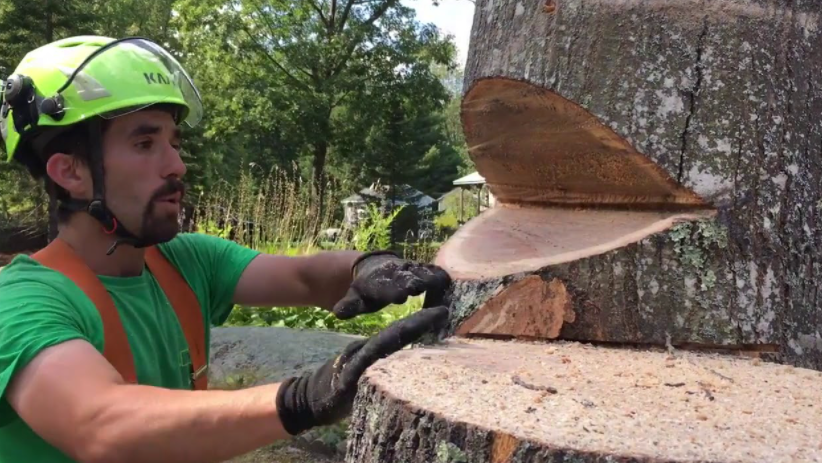 How to cut a leaning tree in the opposite direction